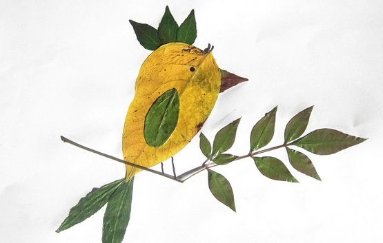 Google Image Result for http://parentables.howstuffworks.com/media/images/leaf_bird.jpg