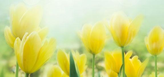 1 800 flowers ceo jim mccann