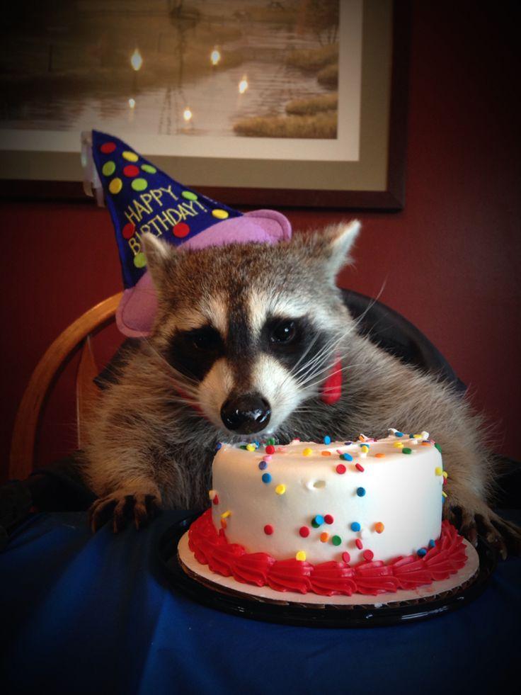 Открытка с енотом на день рождения