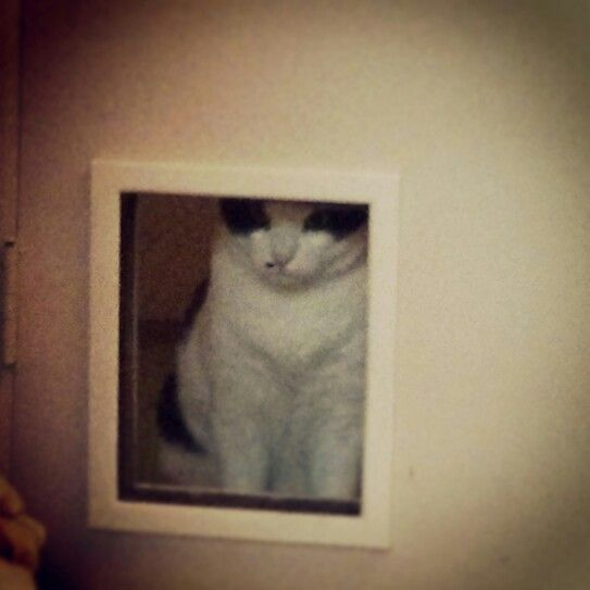 301 moved permanently With cat bathroom door