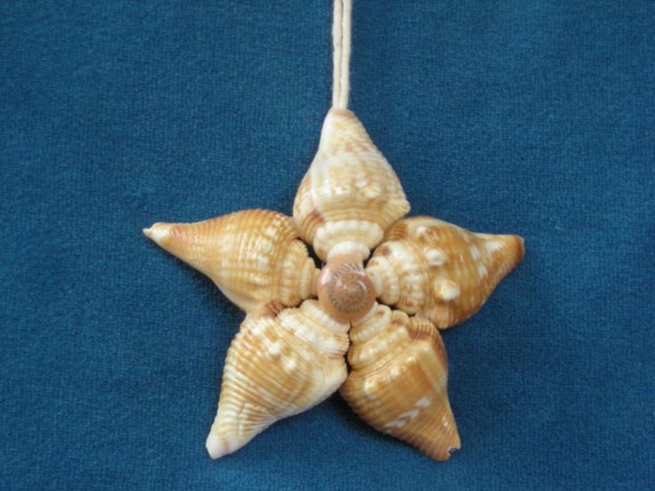 Sea shell star ornament beach xmas ideas pinterest for Seashell ornament ideas