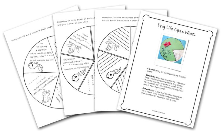Frog Life Cycle Wheel: Students will use the wheel to show how they ...