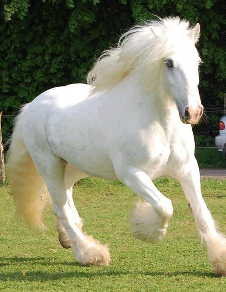 Фото самых красивых лошадей мира