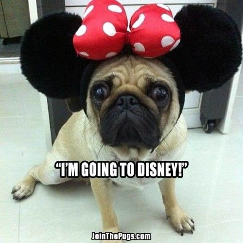 Minnie Pug - Join the Pugs