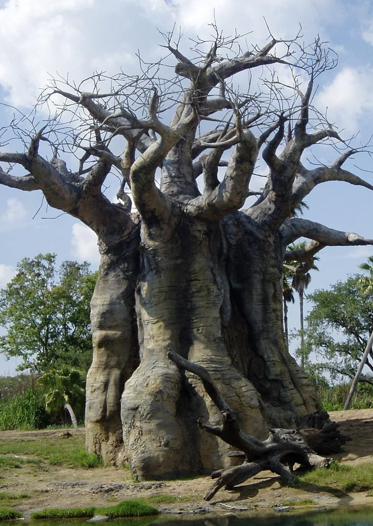 Upside Down Tree Disney Animal Kingdom Pinterest