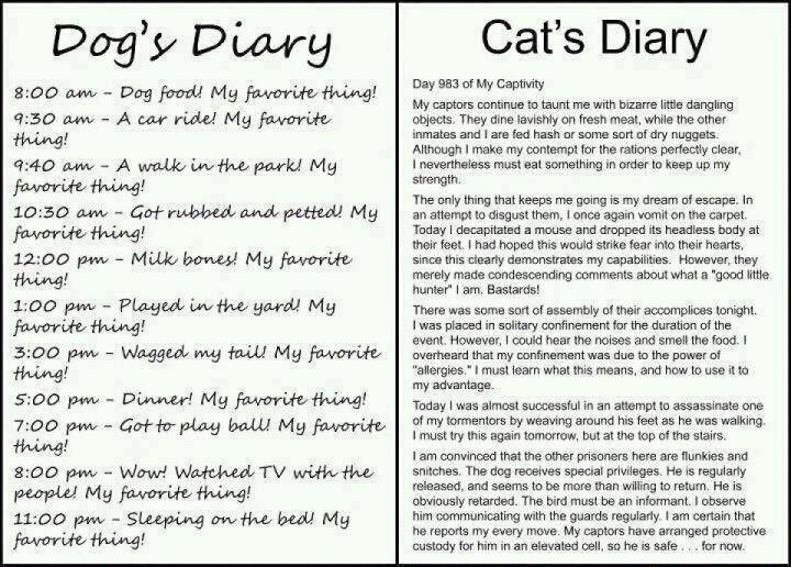Dog Diary Vs Cat Diary Facebook