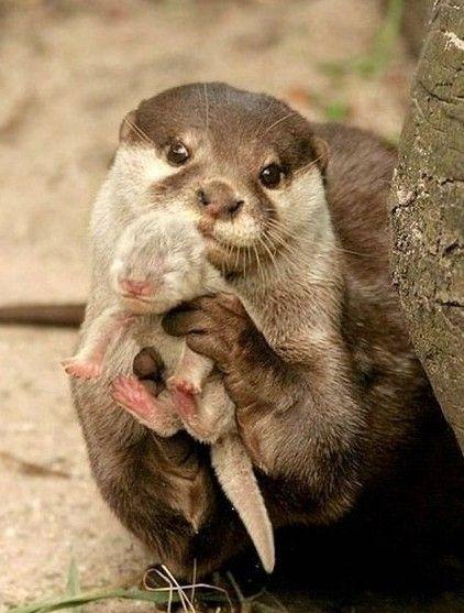 #Otters