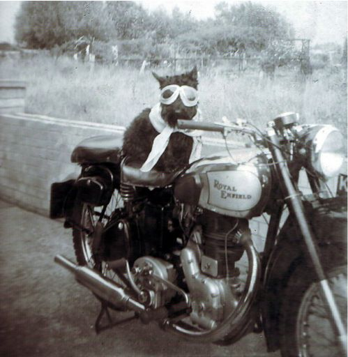 Moto Scottie!