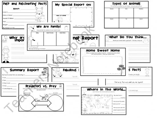 report booklet template 2nd grade pinterest