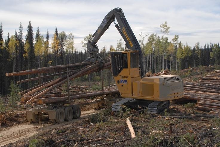 Tigercat 880 Logger | Logging Equipment | Pinterest