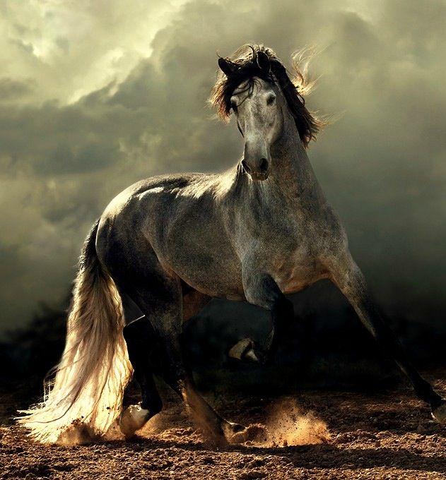 majestic horses