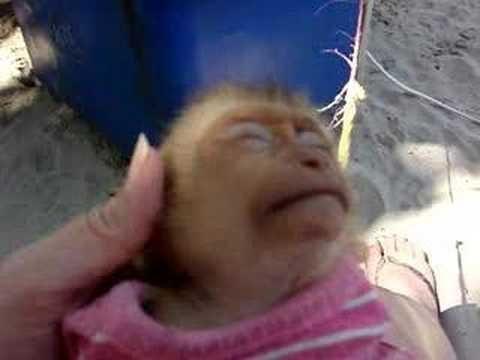 Baby Monkey Enjoys A Head Massage