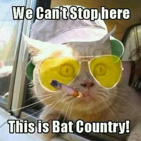 Bat country   Funny Vintage Photos   Pinterest