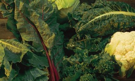 Winter Greens Lasagna | eat your greens! | Pinterest