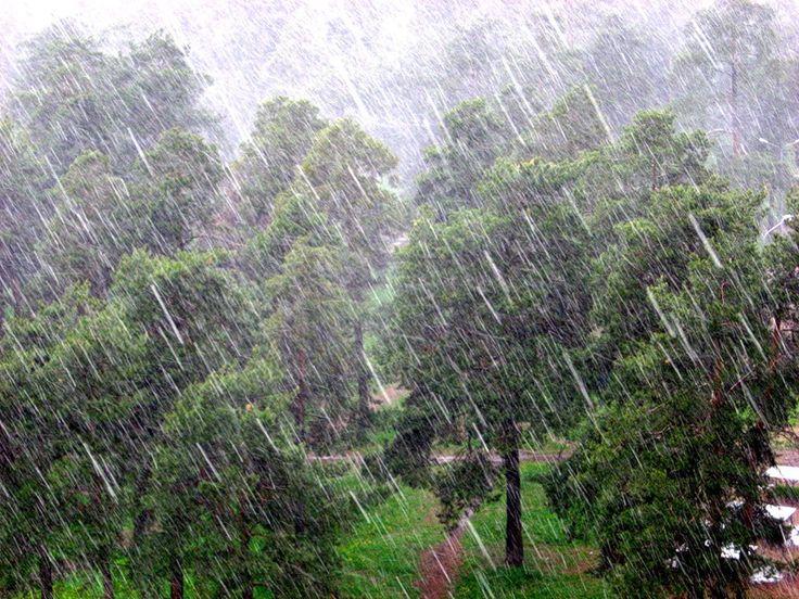 фото летний ливень