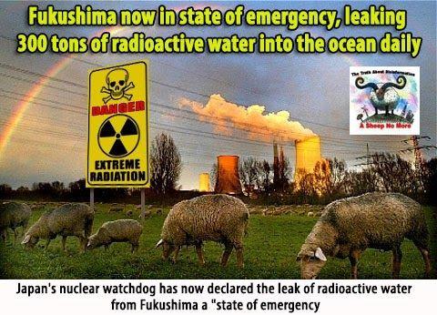 http://s-media-cache-ak0.pinimg.com/736x/b7/83/7f/b7837f92eae6de4490092bc5e4ea9848--a-sheep-fukushima.jpg