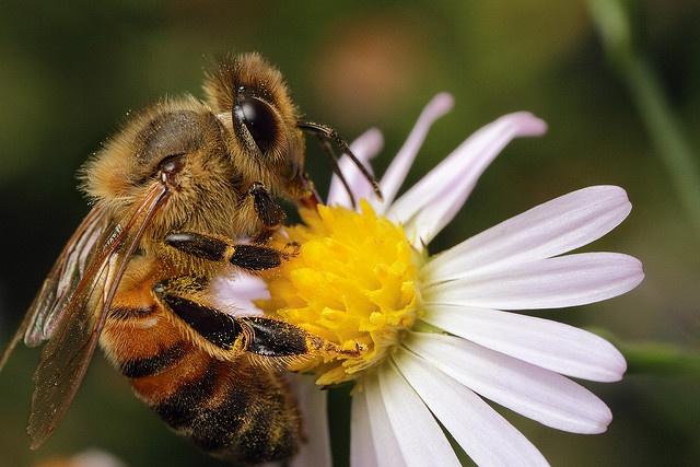 bee pollen skin care