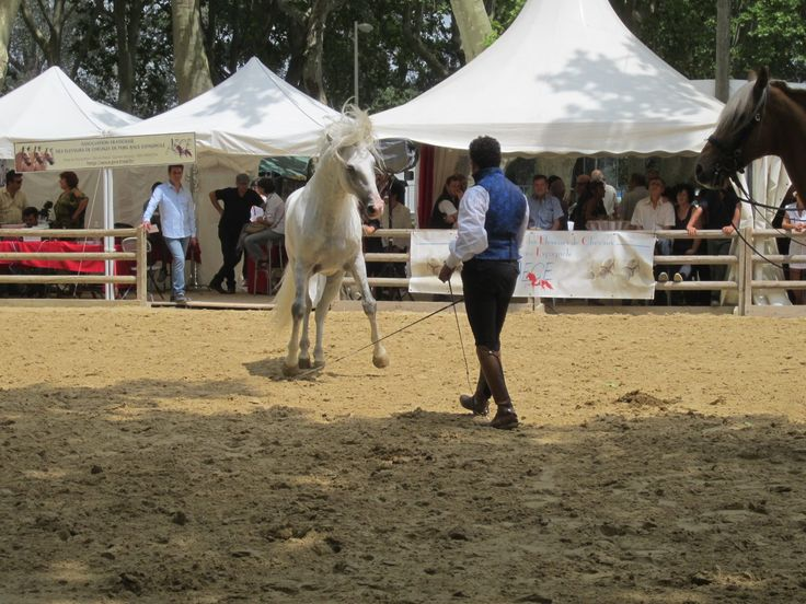 Rencontres equestres mediterraneennes beaucaire 2016