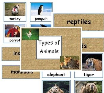 Types of Animals - Classifying - English - Sorting Animals