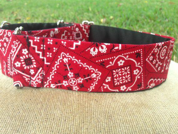 martingale dog collar red bandana