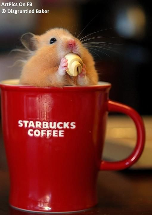 starbucks coffee valentine's day