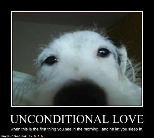 Funny Dog Love Quotes : Unconditional love... Animules :) Pinterest