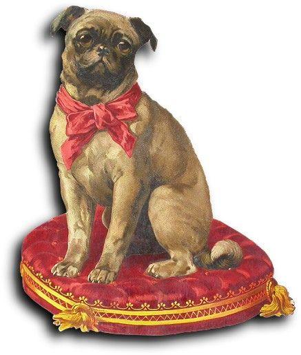 Victoria scrap: dog