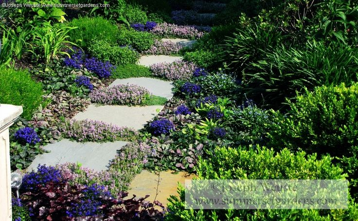 http://www.summersetgardens.com  A small garden path located in Warwick, NY  Thyme, Ajuga, Lobelia& Sedum
