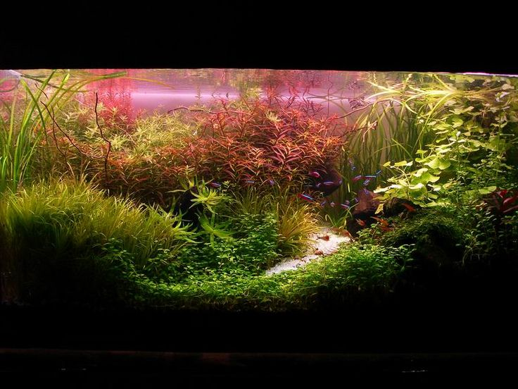 Dutch Aquarium Planted tank Pinterest