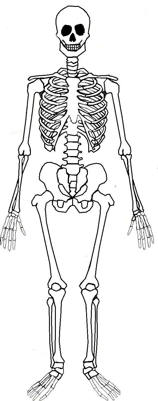 human skeleton unlabeled diagram  u2013 defenderauto info