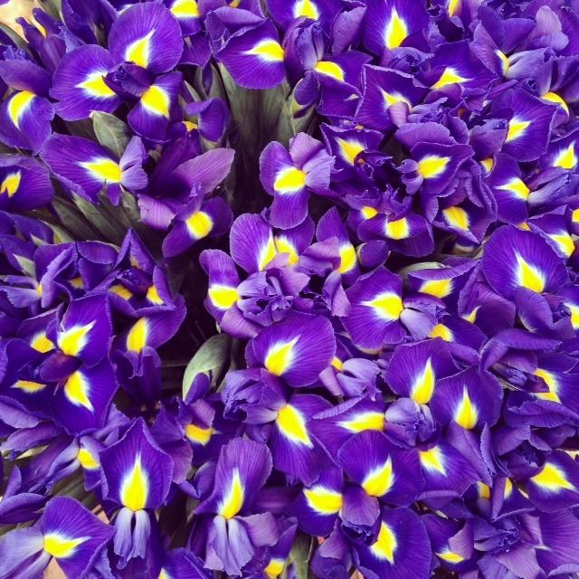 purple & yellow flowers | Patterns. | Pinterest