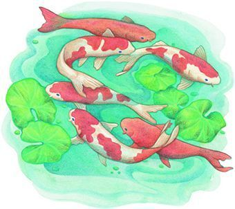Drawing Koi Fish In A Few Simple Steps