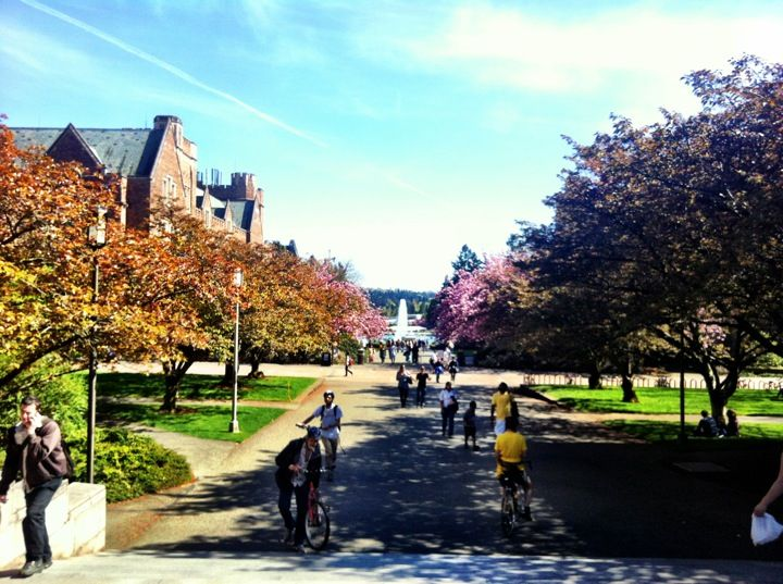 an essay on the admission at the university of washington Freshman application process you should apply to the george washington university their story with the admissions committee the essay will be 250 to.