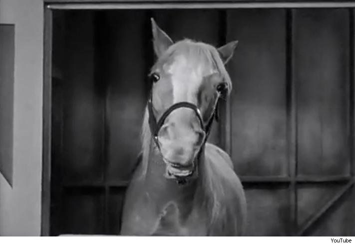How did they make Mr. Ed Talk ?http://www.straightdope.com/columns/read/383/how-did-they-get-mr-ed-to-talk