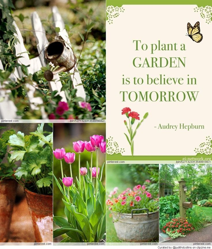17 Best Ideas About Gardening On Pinterest: Pinterest Diy Garden Ideas Photograph