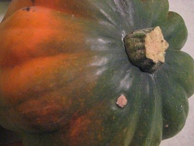... Weeks of Winter Squash – Roasted Corn Pudding in Acorn Squash Cups