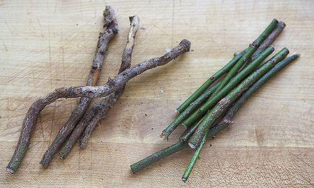 sassafras twigs roots - homemade root beer recipe, no fermentation