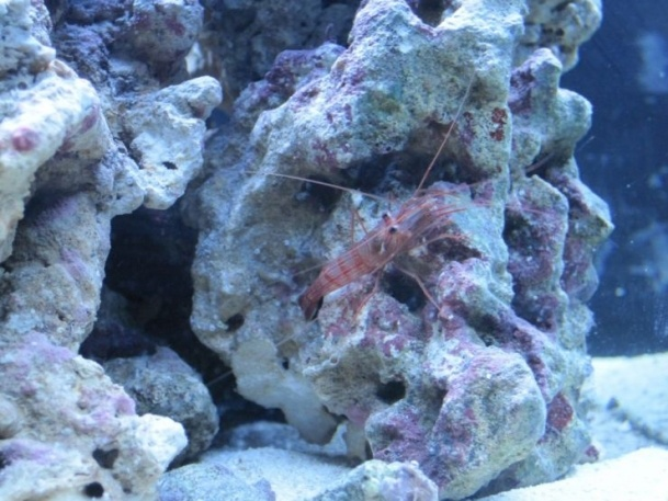 360 - photo at Saltwaterfishbook reef aquarium inverts Pinterest