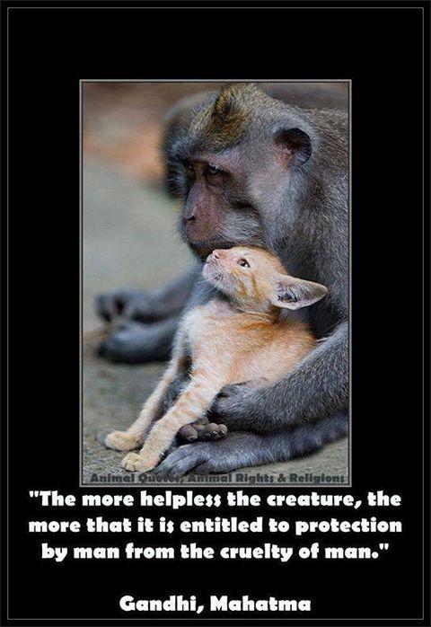 Helping Animals Quotes Quotesgram