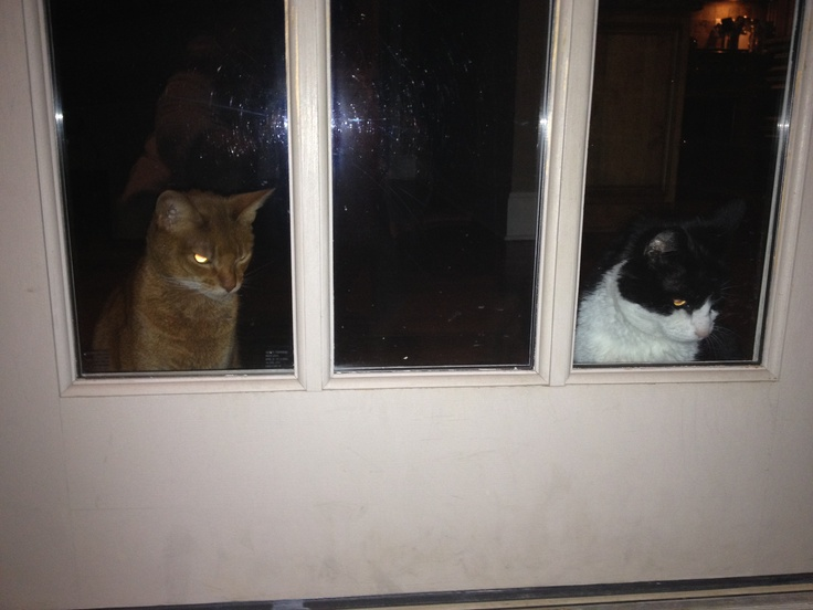 Cats intimidating the dog from coming inside