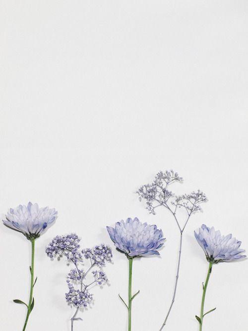 matt flowers tumblr