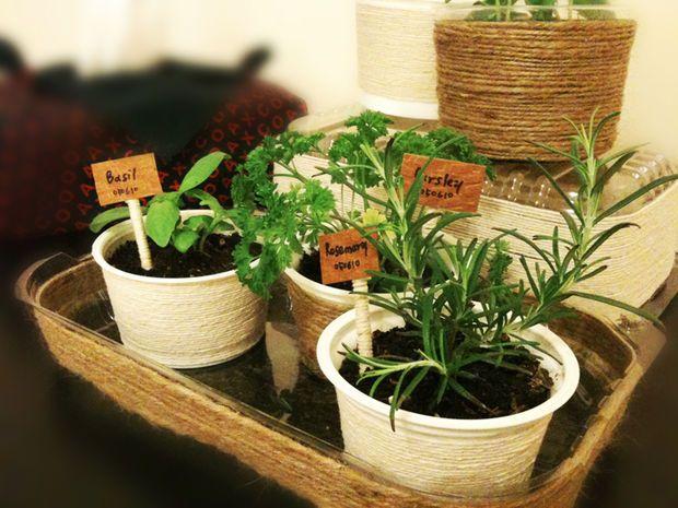Mini Indoor Herb Garden Home Ideas Pinterest