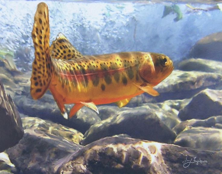 Golden trout golden trout pinterest for Ohio state fish