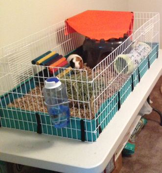 Pin by leah bauer on guinea pig cage ideas pinterest for How to make a cheap guinea pig cage