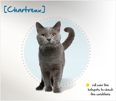 Did you know the history of the Chartreux is the subject of much speculation? Stories of their origin vary from being the cats of Carthusian monks in the French Alps to descending from the feral cats of Syria. Whatever their true heritage, the Chartreux arrived in France in the 16th century, and that became their home. In fact, it was not until 1971 that they ventured upon American soil. Read more about this quiet yet intelligent breed at the Petplan pet insurance website: http://ow.ly/9t2ao