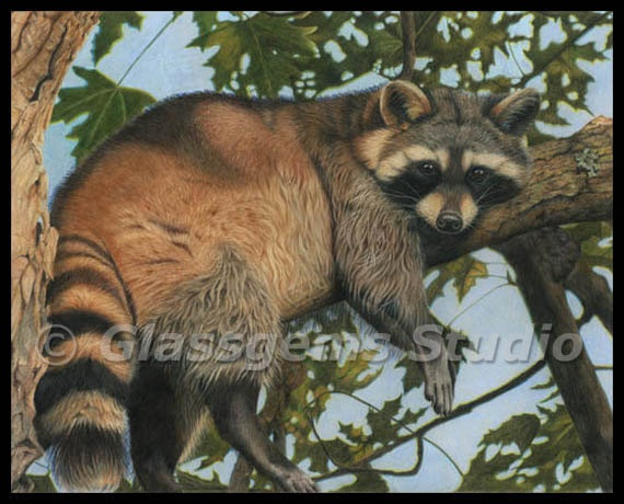 Rest Stop  16 x 20 Limited Edition Print of a Raccoon by gemmagy, $150.00