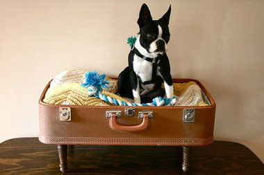 vintage suitcase dog bed featuring a very cool looking boston terrier