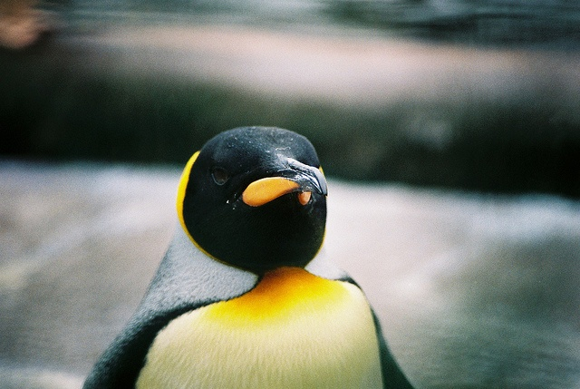 penguin #penguin #film