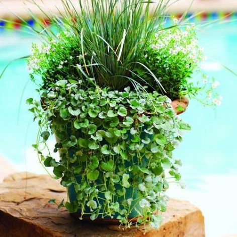 unique container gardens for any yard