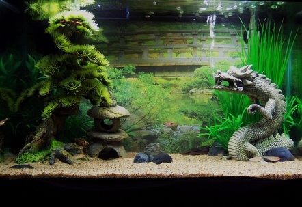 2 5 gallon aquarium theme ideas freshwater aquarium fish for Decoration zen aquarium